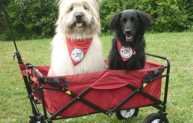 Therapiehunde im Bollerwagen